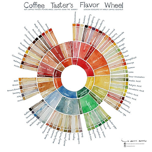 Coffee Taster's Flavor Wheel 12x12 cm Set