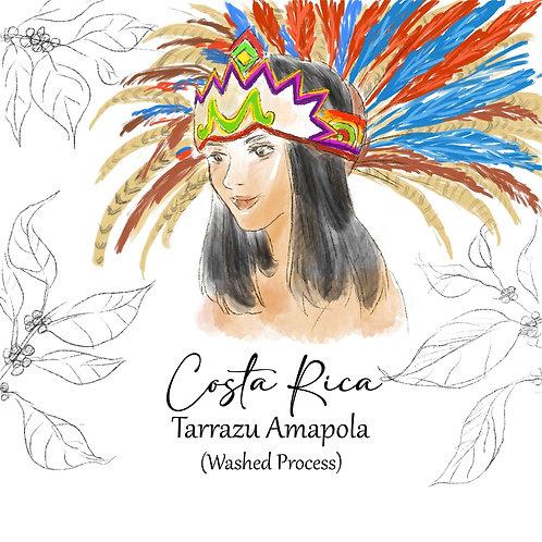 Costa Rica Tarrazu Amapola (Washed Process) {Filter}