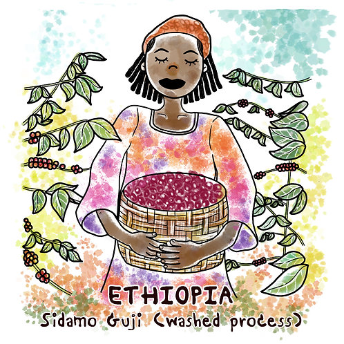 Ethiopia Sidamo Guji (Washed Process) 11 g {Drip Bag}