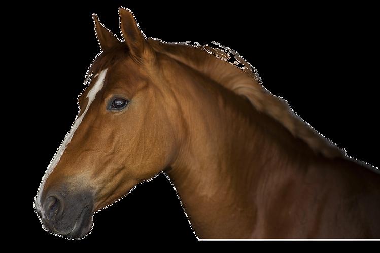 Ecurie-de-l'etrat-centre-equestre-dinan-