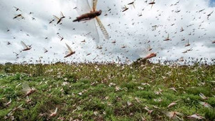 LOCUST ATTACK AND POSSIBLE STEPS THAT GOVERNMENT CAN TAKE