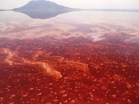 The Red Hot lake of Tanzania, landing on which animals turn into dead-stone instantly.