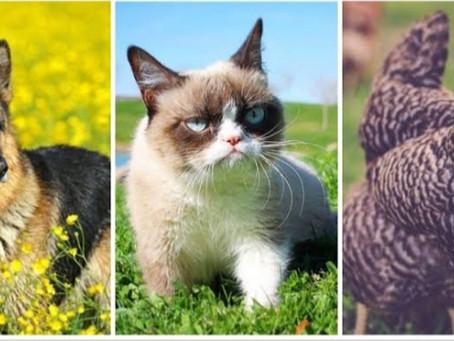 Top 5 Richest Animals in the World…