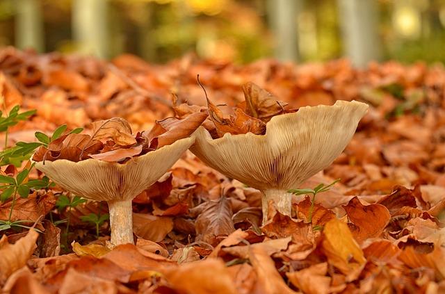 mushroom-3145773_640