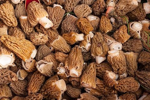 True Morel Mushrooms-Fresh