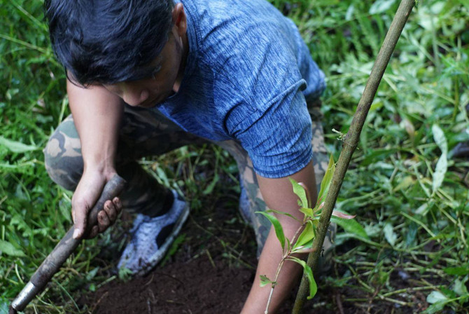 Indonesia Plants 200 Trees