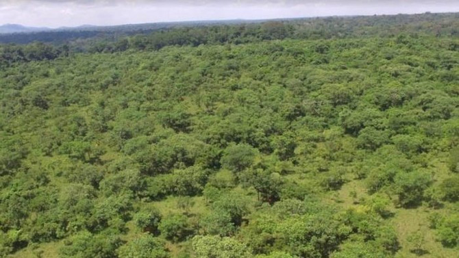 URGENT: Save the The Bugoma Forest