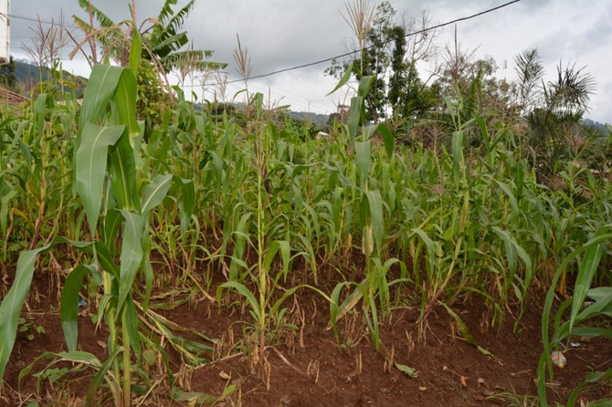 Climate Change and the Struggles of Smallholder Farms