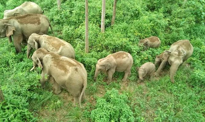 ISEC Nepal: Human-elephant conflict around Bardia National Park