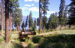 Hazard Tree Removal - Vallecito Lake