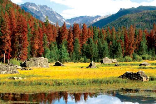 pinebeetlekill_Colorado_NCAR1.jpg