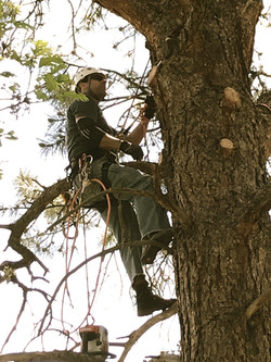 Pruning - Durango West