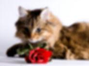 cat_with_rose.jpg