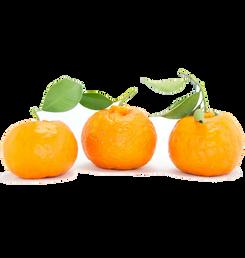kamkwat fruit (square).png