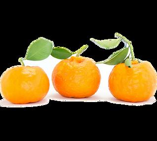 kamkwat fruit.png