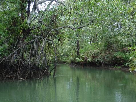 Estero de Coquí