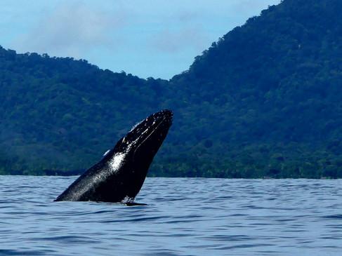 salto ballena
