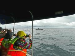 Lomo de ballenas desde lancha
