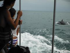 Ballenas de lancha