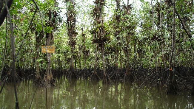 Estero y manglares Coquí Pijibalodge