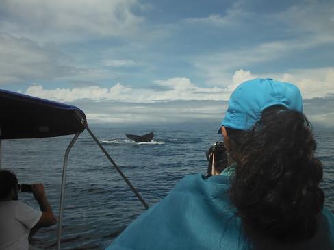 Cola de ballena desde lancha