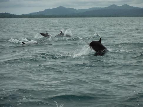 Delfines y ballenas jorobadas