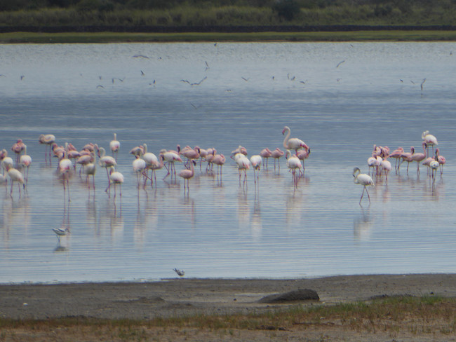 #Week 15 l Team 4: Important changes on their plans and a visit to lake with flamingos