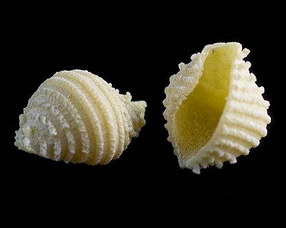 Shells FM