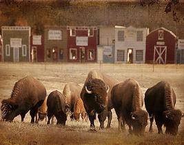 Buffalos at Arena.jpg
