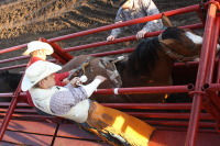 Rodeo 11.jpg