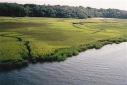 Marsh pic1 (Mobile).jpg