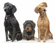 3-Dogs3Ps.jpg