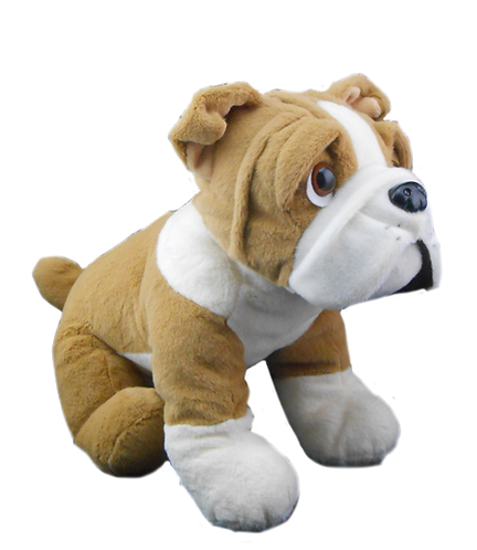 Buddy the Bulldog