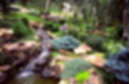 perennial garden and waterfall.JPG