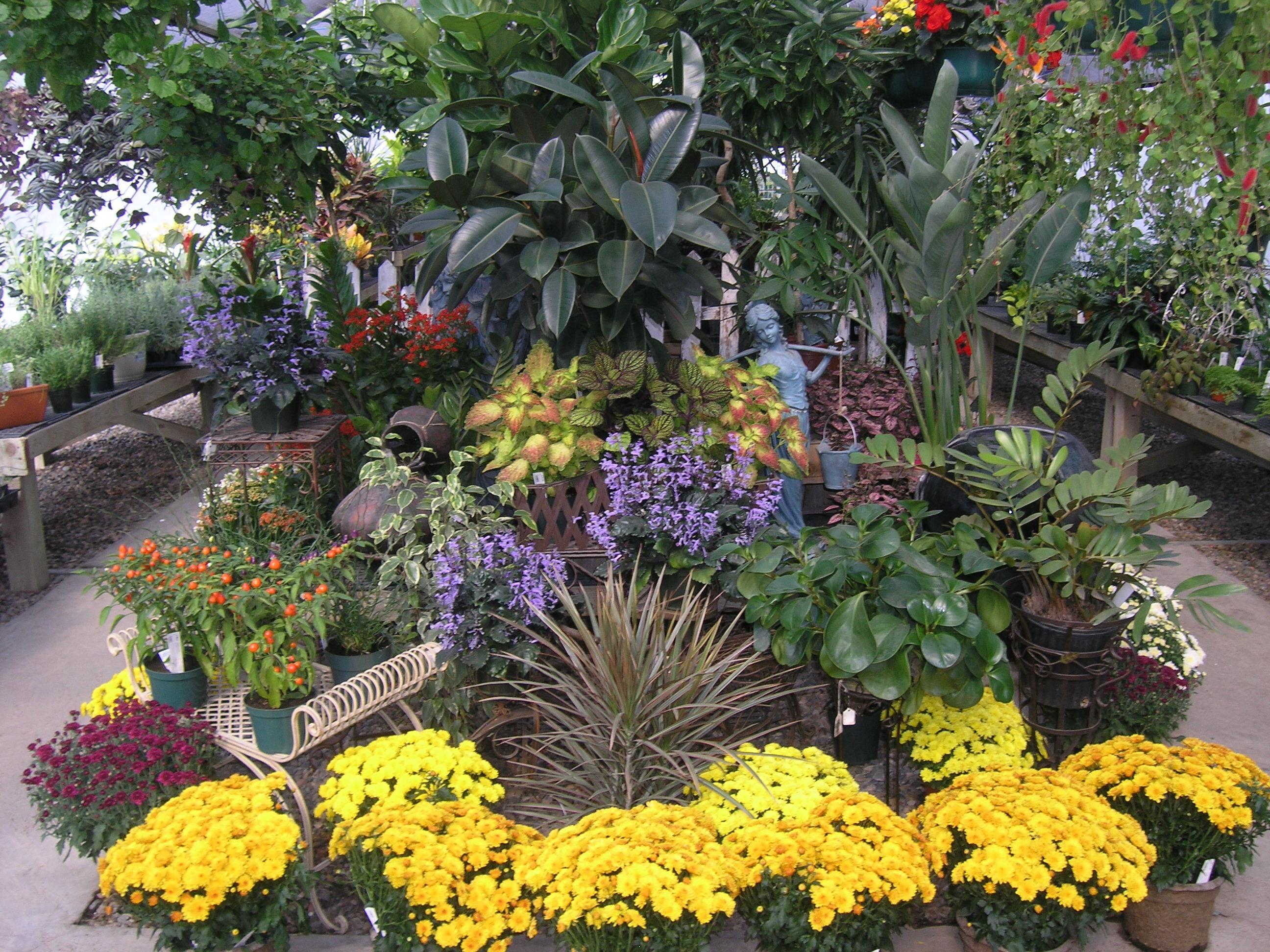 landscape garden center vail avon edwards the wildflower farm
