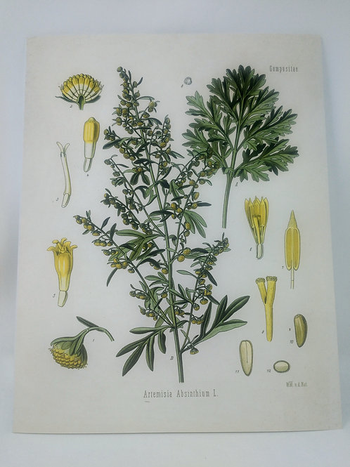 Vintage Botanical Wormwood Absinthe Plant Print