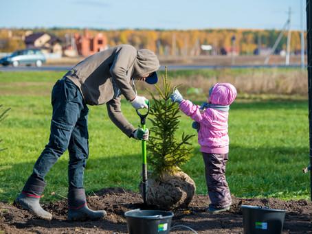 Рассказываем, какие хвойные растения лучше всего посадить на загородном участке