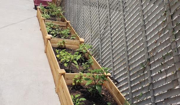 Donated vegetable garden