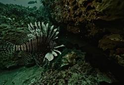 JBO-MainPage-Lionfish-DARKER