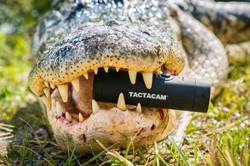 ATTO-S12-FL-Gator Tactacam 04
