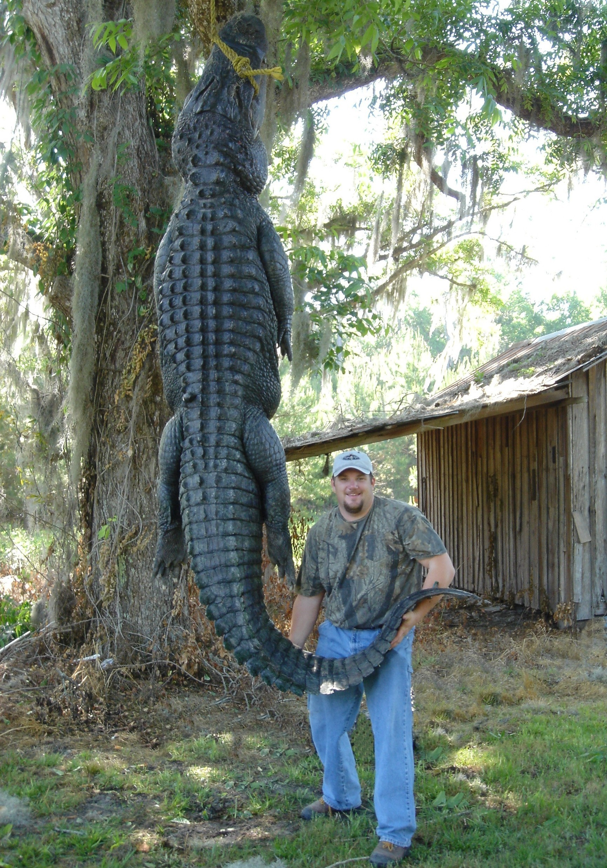Atto-Early Years-Florida-Jon-Gator-001