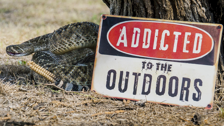 ATTO-S11-Texas-Snake-001