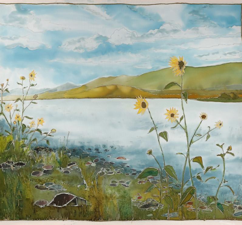 Wild Wyoming Sunflowers