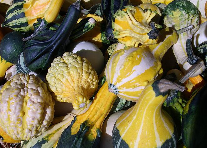 Gourds we harvested in 2017.jpg