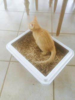 Litière pour chats