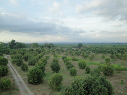 Avocado Farm