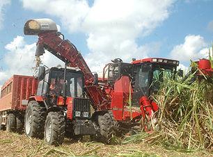brazil-sugarcane-shutterstock.jpg