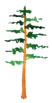 Pine3.png