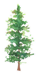 Pine34.png