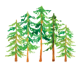 PineTreeForest4.png